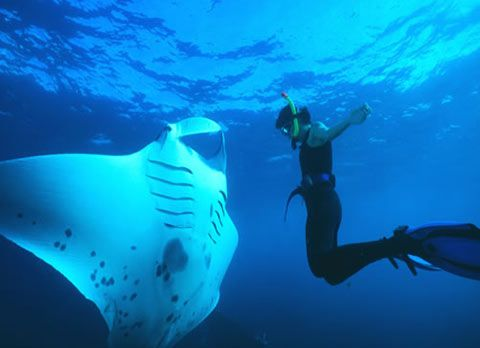 Manta Ray Snorkeling Dive Resort