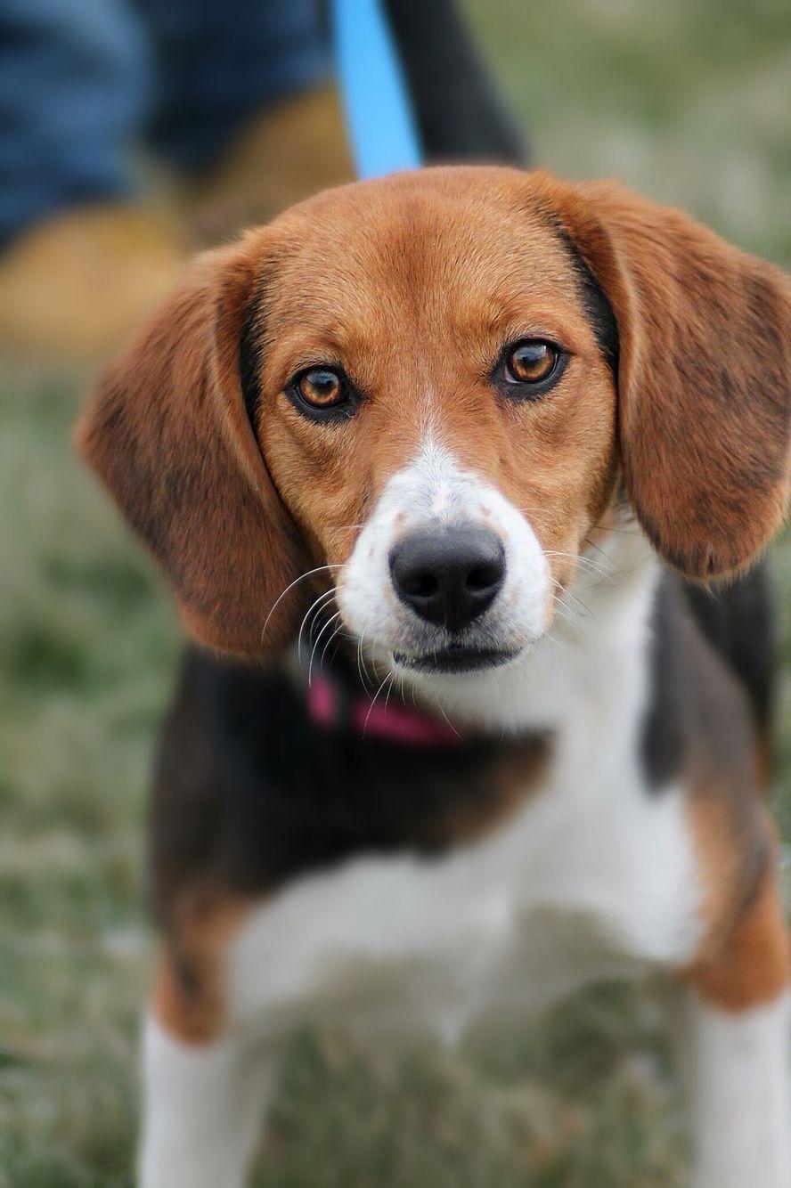 Shelter Dog Beagle Allegra Nicole Photography Dogs Shelter