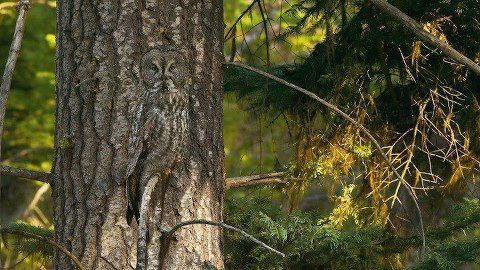 I'm not sure if this is real or Photoshopped, but there's an owl in the tree...