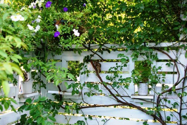 お庭(ガーデン)ザ・シーズン港北