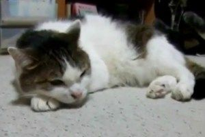 Adorably Depressed Cat Sings the Blues