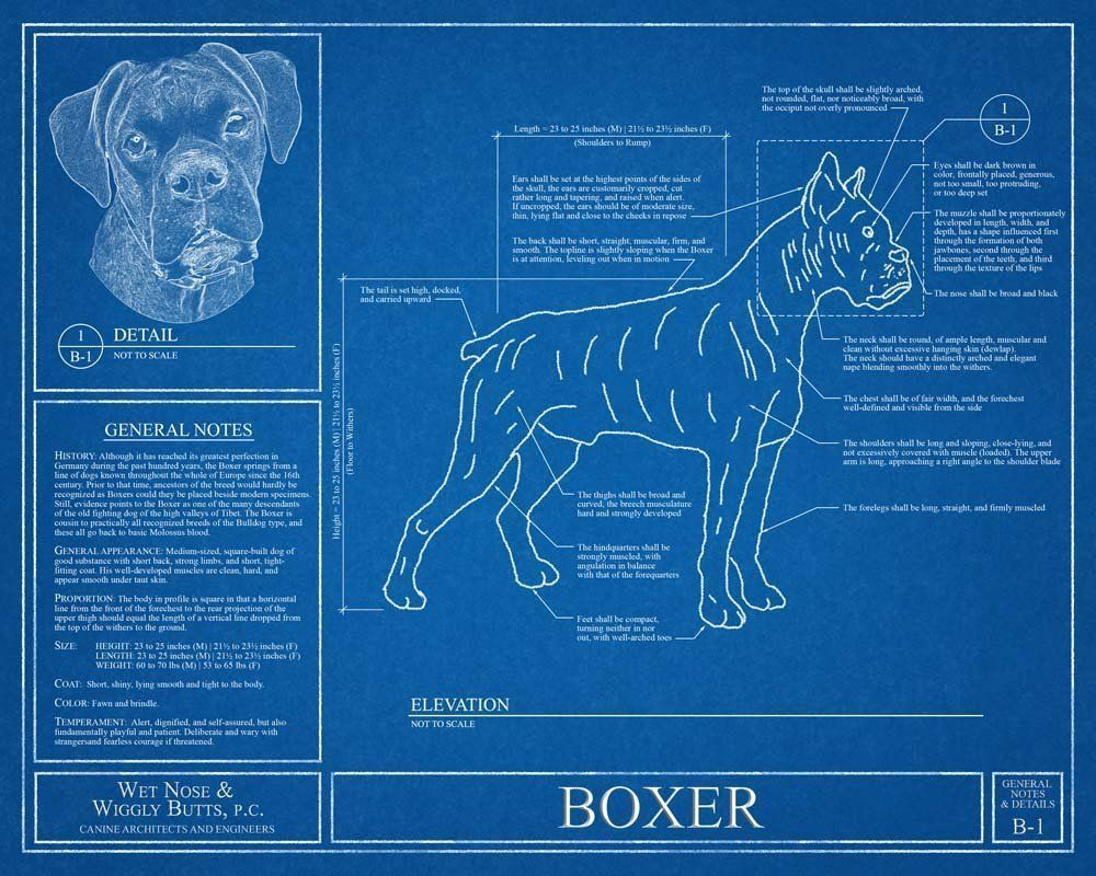Boxer dog blueprint this boxer dog blueprint is a wonderful piece boxer dog blueprint this boxer dog blueprint is a wonderful piece of art that will malvernweather Image collections