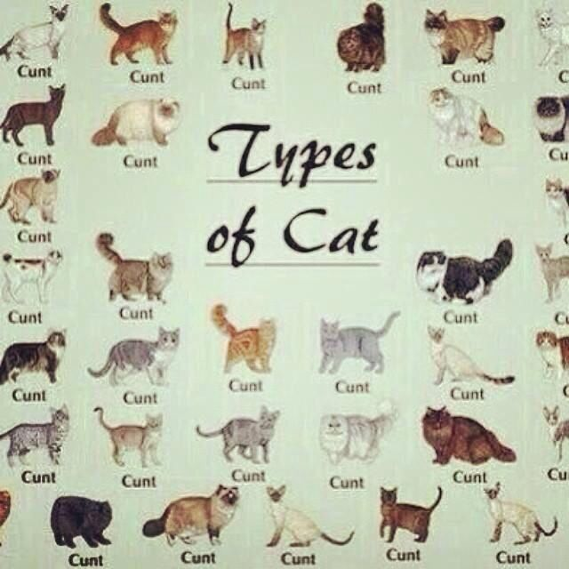 Types Of Cats Cat Breeds Chart Types Of Cats Different Breeds