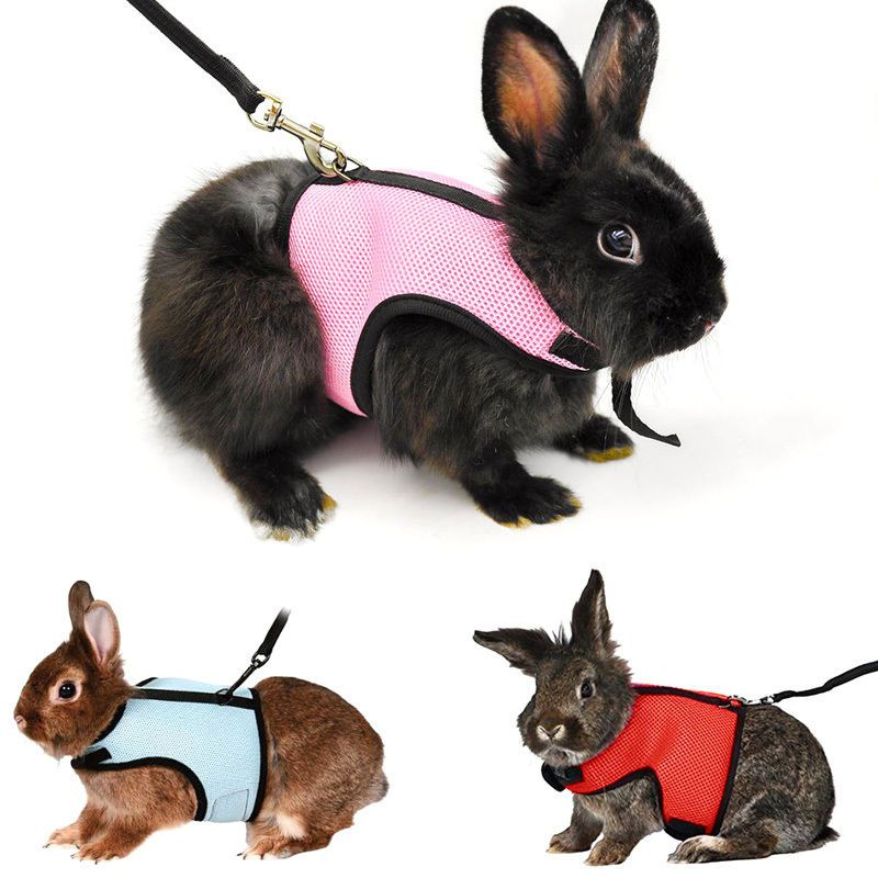 Cute hamster rabbit guinea pig rat ferret cat breathable harness cute hamster rabbit guinea pig rat ferret cat breathable harness leash lead publicscrutiny Gallery