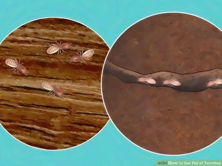 Get Rid of Termites Termite control, Types of termites