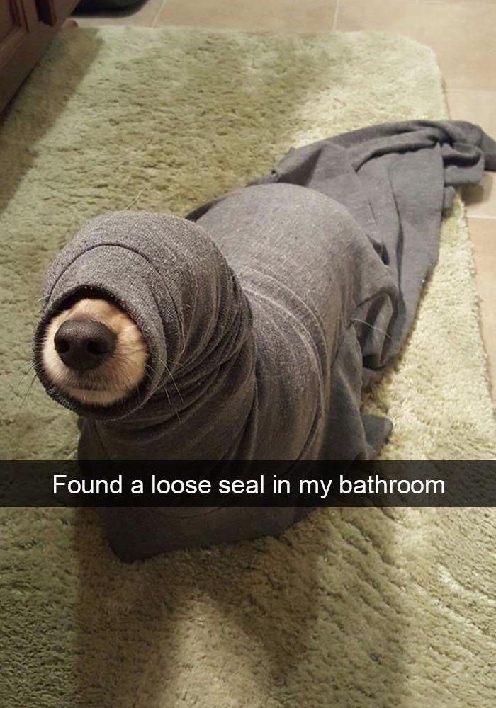 Lustige Bilder von Hunden, die nie erfahren werden, wie lustig sie sind, gibt es auf Snapchat – animal blog