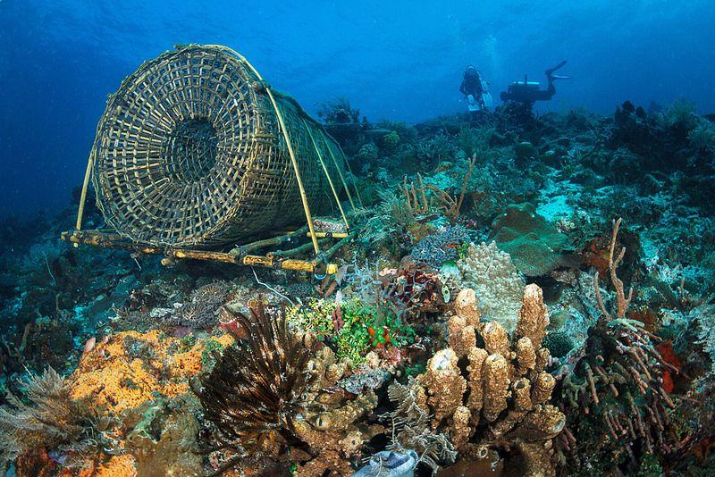 Fish traps in Alor
