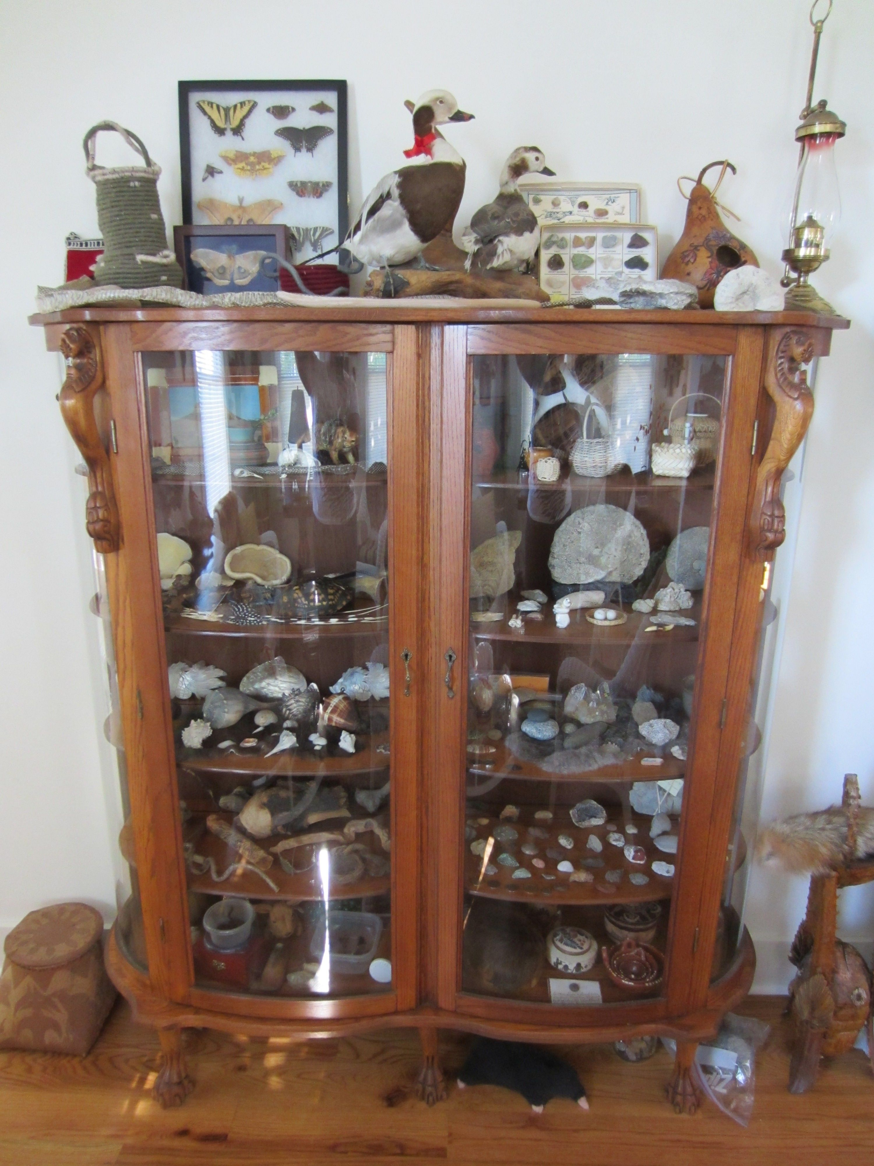 Oak reproduction china cabinet repurposed to a Naturalist science
