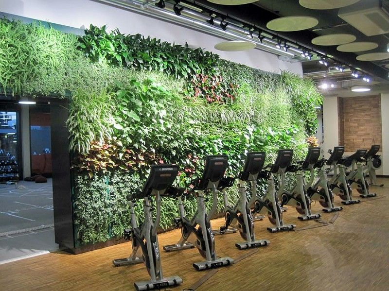 Live Enviro-Wall as a striking design piece in a gym | Jardines ...