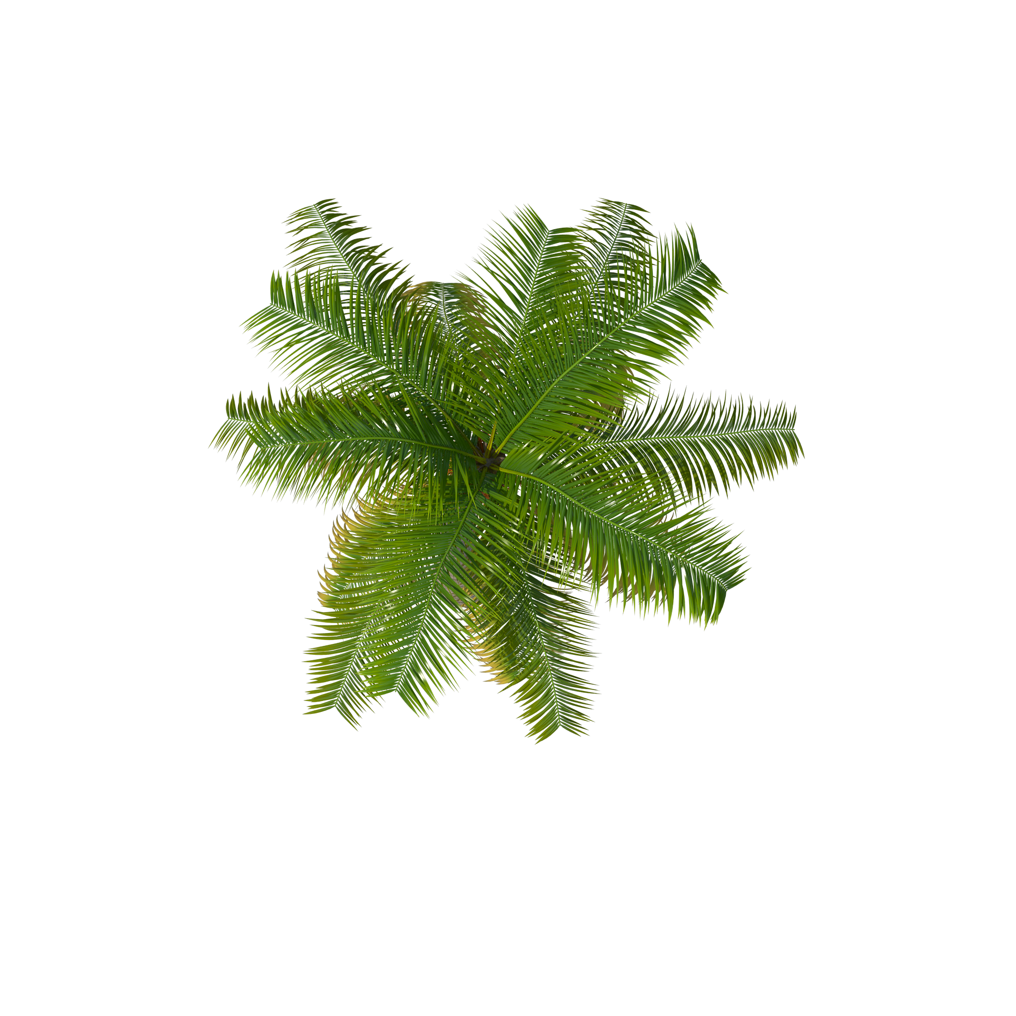 Flower Plant Top View Png Palm Tree Top Palm Tree Trees Top View Tree Tops