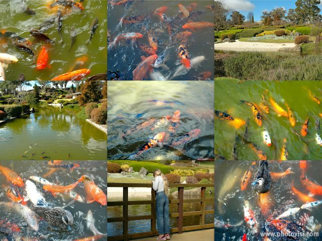 372f8dd67674ac4013f92df88306e590 - Best Time To Visit Cowra Japanese Gardens