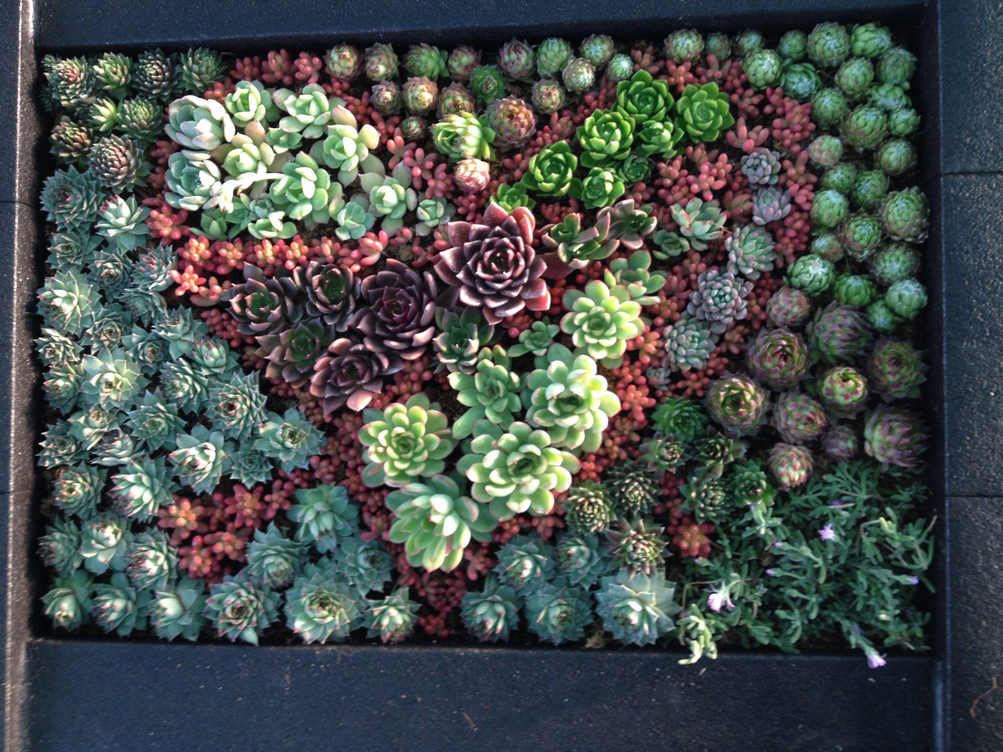 del jard n vertical al arte vegetal en cuadros vivos coraz n cubista elaborado con plantas. Black Bedroom Furniture Sets. Home Design Ideas