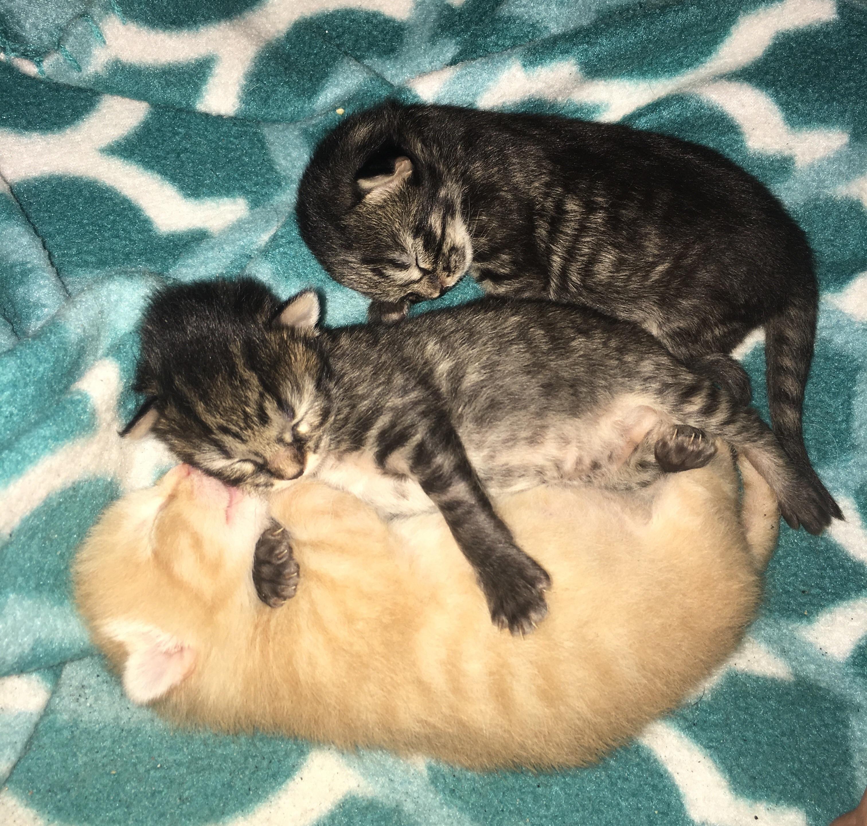 A Kitten Caboodle Https Ift Tt 2onrxts Kitten Kittens Cats