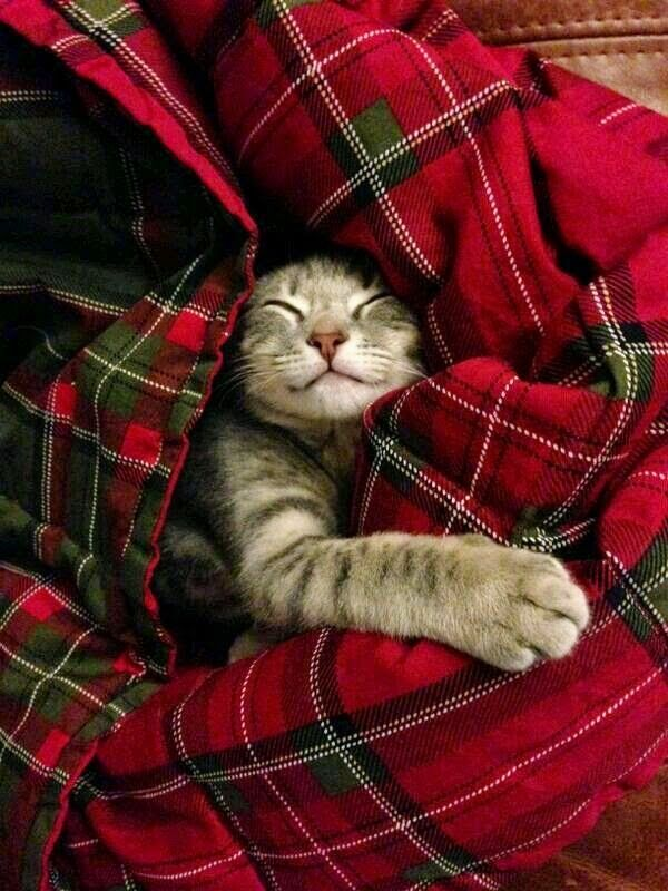 On lazy sundays I want to be just like this cosy cat curled up in a tartan throw - simple pleasures