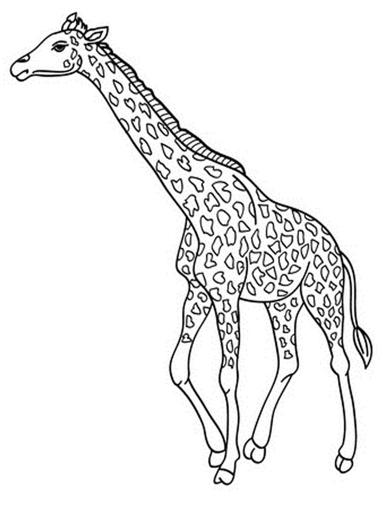 Giraffe Coloring Pages Realistic With Images Giraffe Coloring