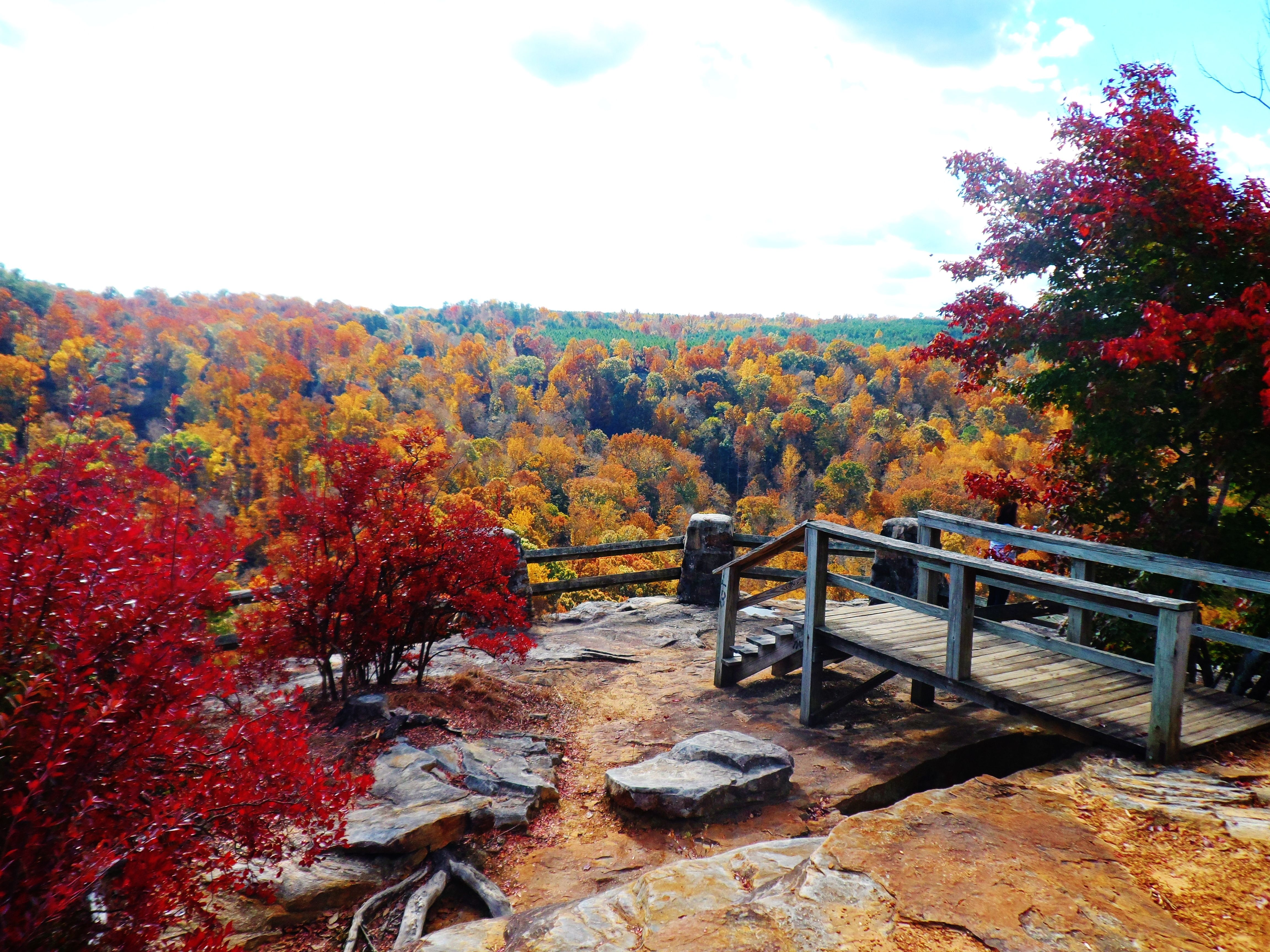 Fall In The South Buck S Pocket State Park With Images