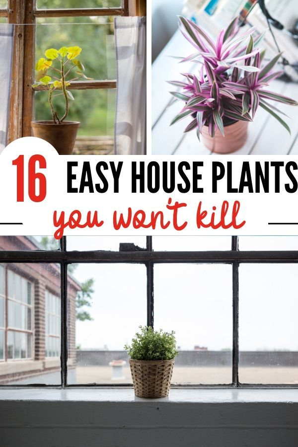 Easy House Plants: 16 Plants That Will Survive