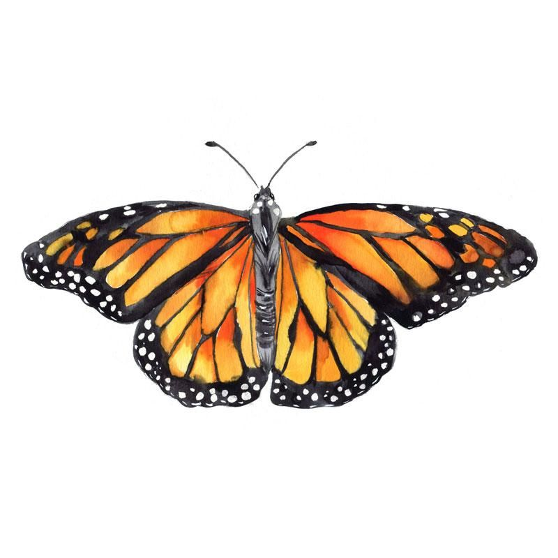 Monarch Butterfly Watercolor Paint Kit Let S Make Art Monarch