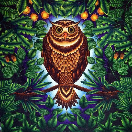 Watercolor And Marker Canvas Of Johanna Basfords Owl Secret Garden By A Tsakrios N