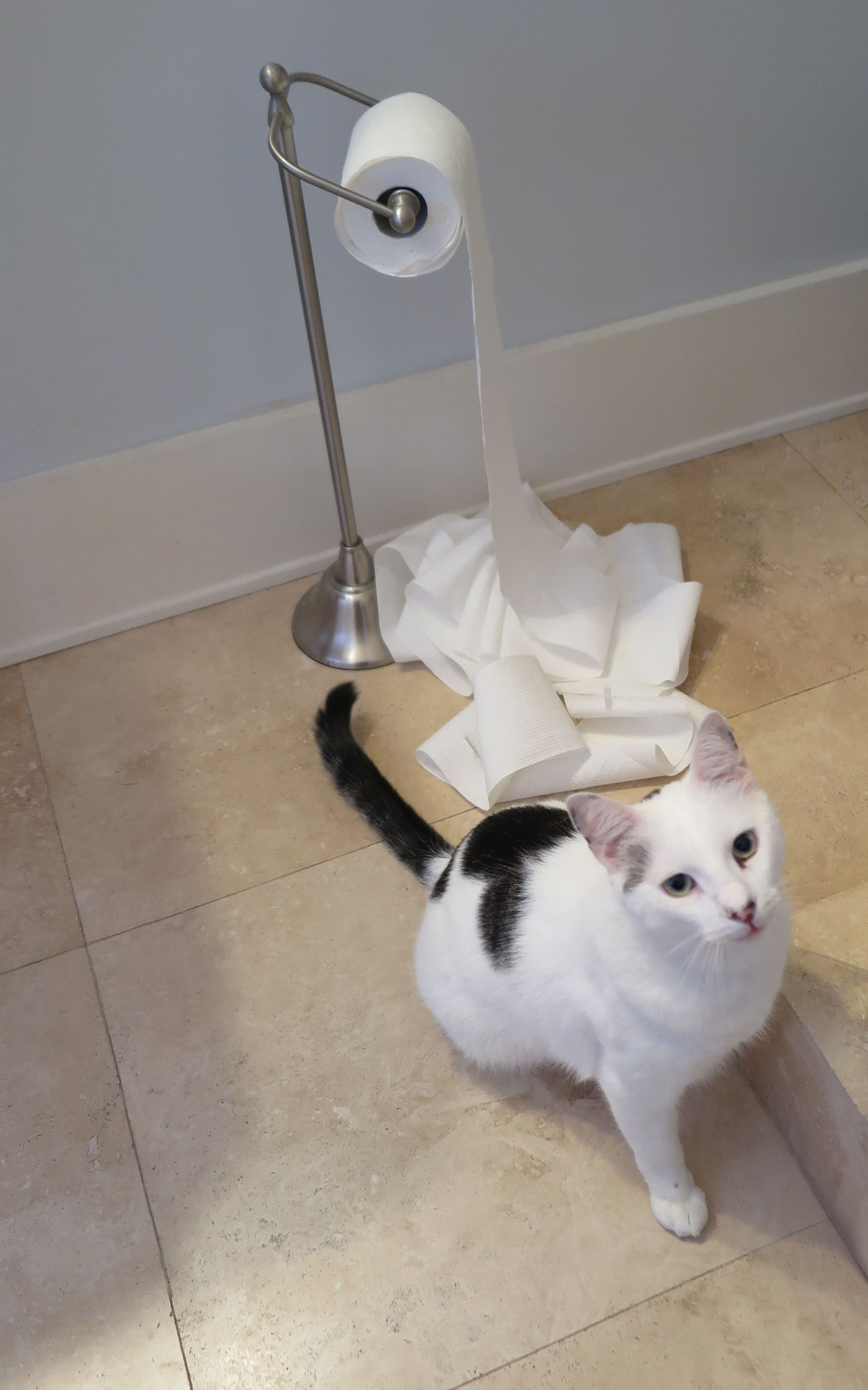 It wasn't me. Photo by Retagene Toilet paper holder