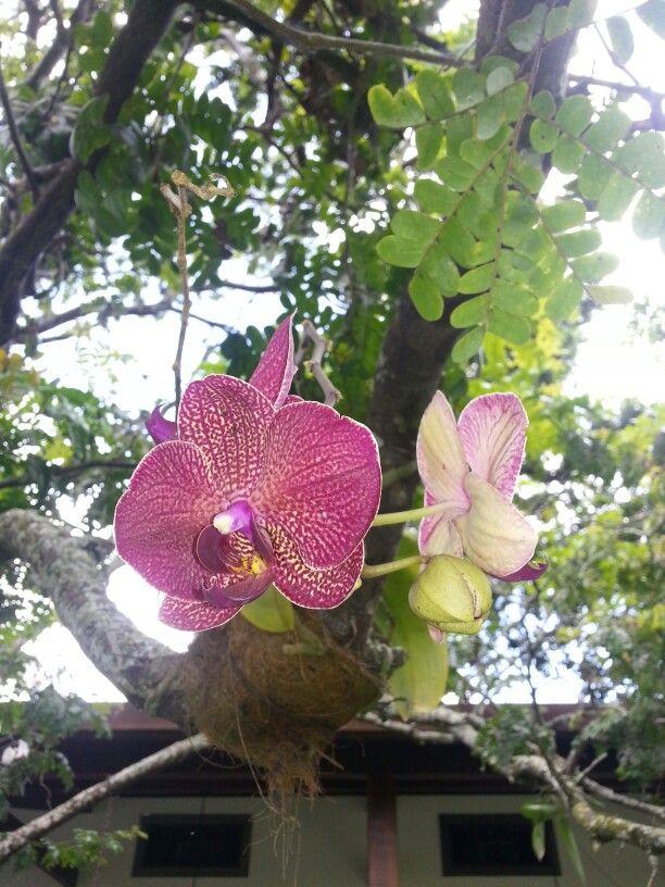 Orquídeas Foto:Lynaldo Cavalcanti