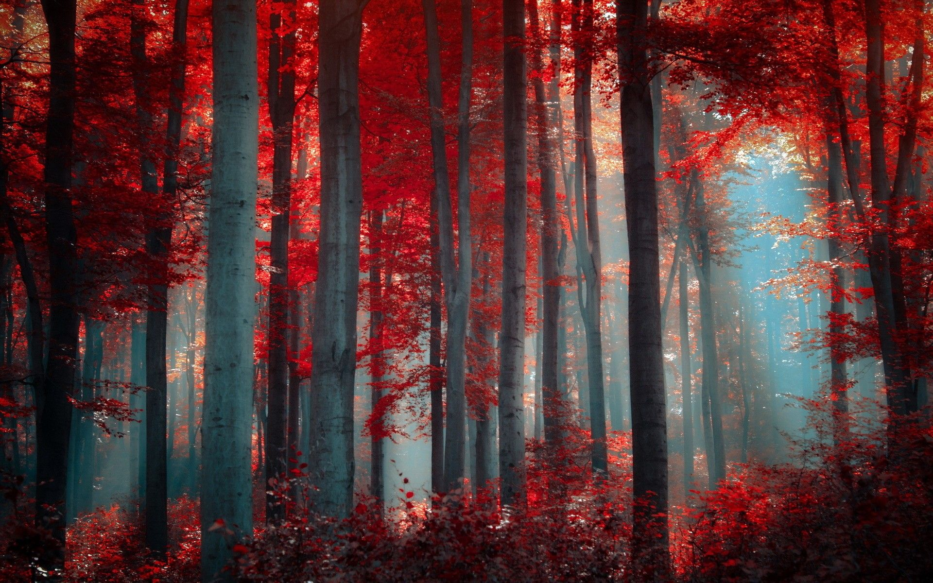 Red Autumn Forest Colorful Beije Amazing Branches Sunrise High Definition Scene Woods Forests Cool Scenery Seasons Leaf Leaves Gray Photography Panorama