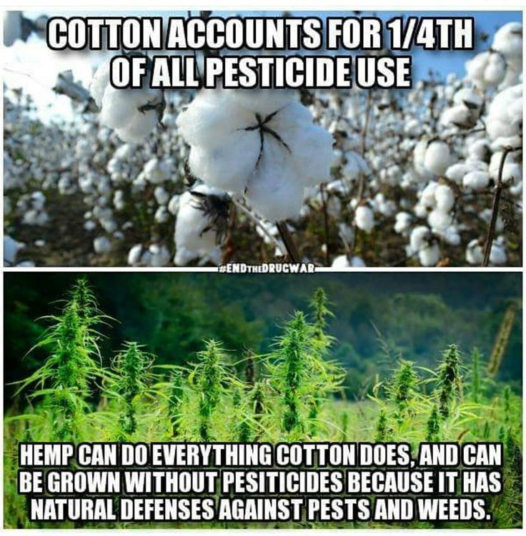 Did You Know Gallery Hemp, Mother earth, Nature