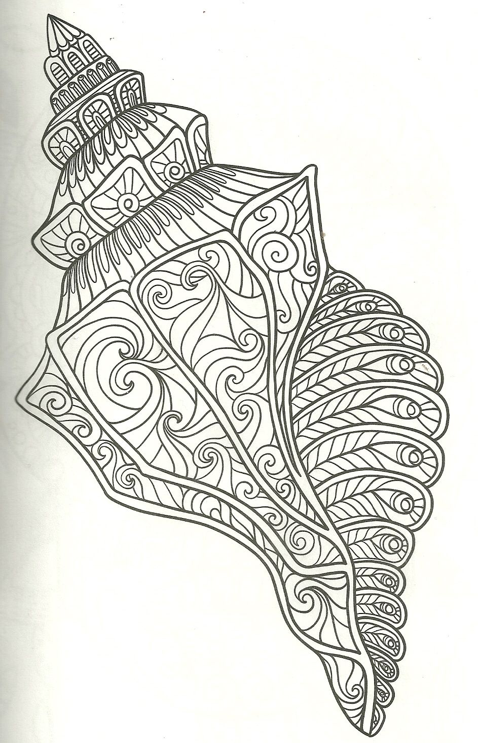 shell coloring page my coloring pages Crayon art