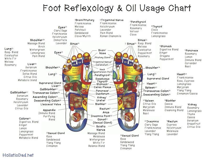 Reflexology Chart and Oil Use | fyi | Reflexológia, doTerra
