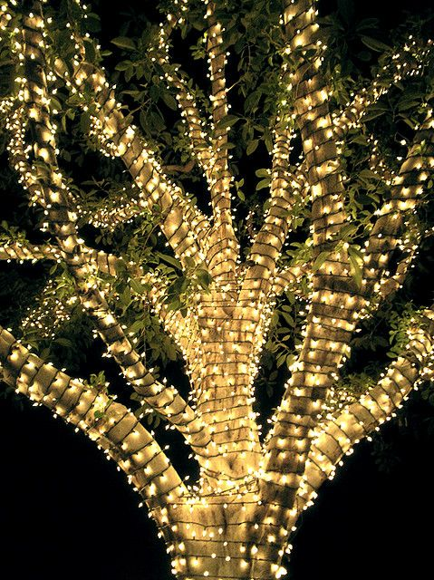 outdoor tree lights year round draping white light wrapped tree diy garden outdoors outside year round wedding event not just for holidays