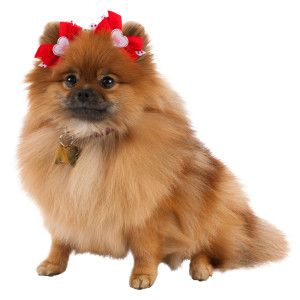 Pet Supplies Pet Accessories And Many Pet Products Petsmart Toy Dog Breeds Pets Dog Bows