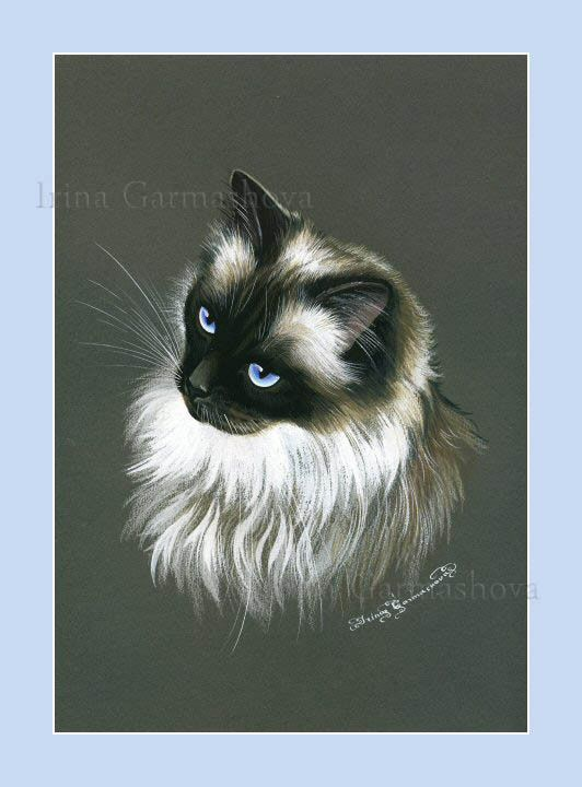 Ragdoll Cat My Darling Print by I Garmashova