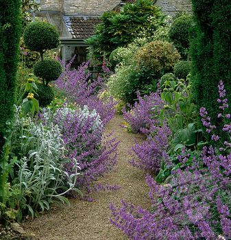   holly topiary   , Nepeta-lined gravel paths lined in box, ligustrum ...