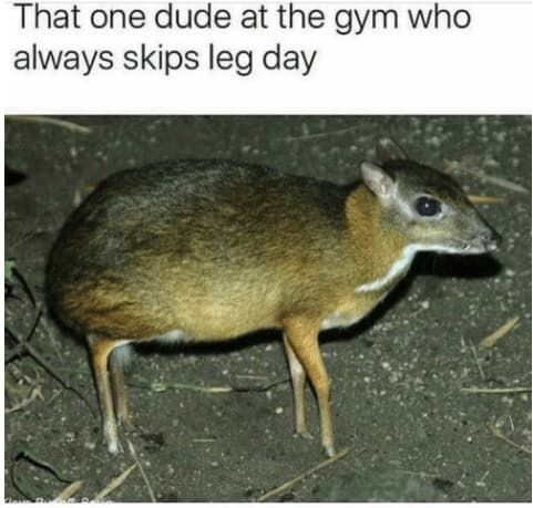 67 Memes About Going To The Gym That Are Way Funnier Than They Should Be -  67 Memes About Going To...