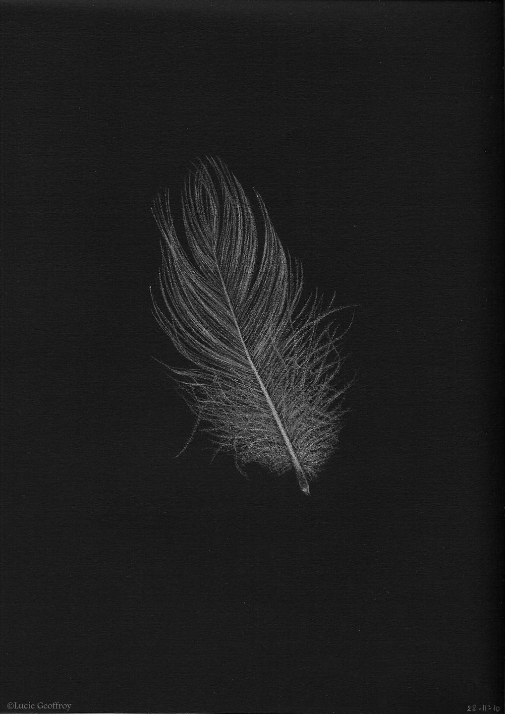 Fond Plume Sombre In 2020 Moonlight Photography Dandelion Wallpaper Sketch Painting