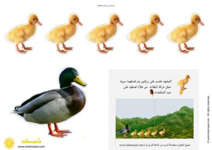 الحيوانات Archives شمسات In 2021 Animals Rooster