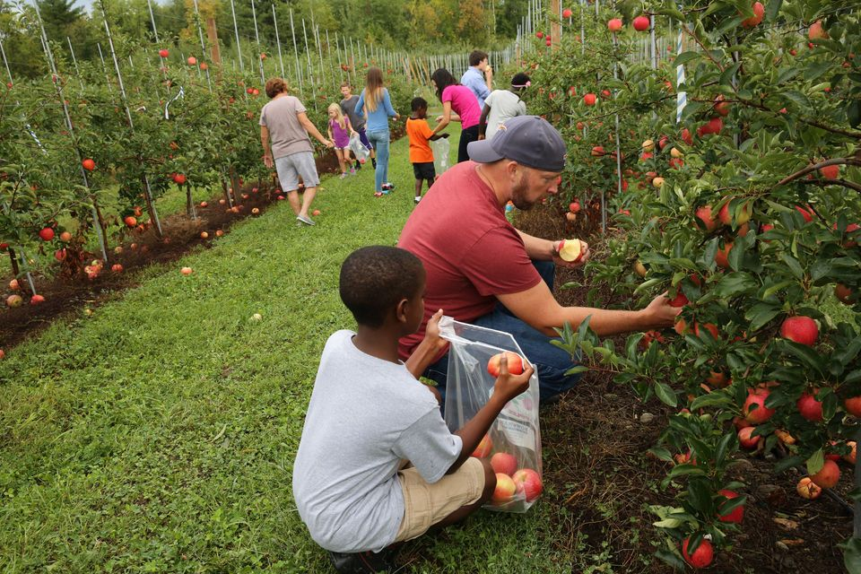Where To Pick Apples In Upstate Ny List Of Every Orchard U Pick