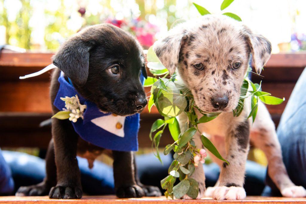 Puppy Love Dog Inspired Wedding Puppies Dog Wedding Puppy Day