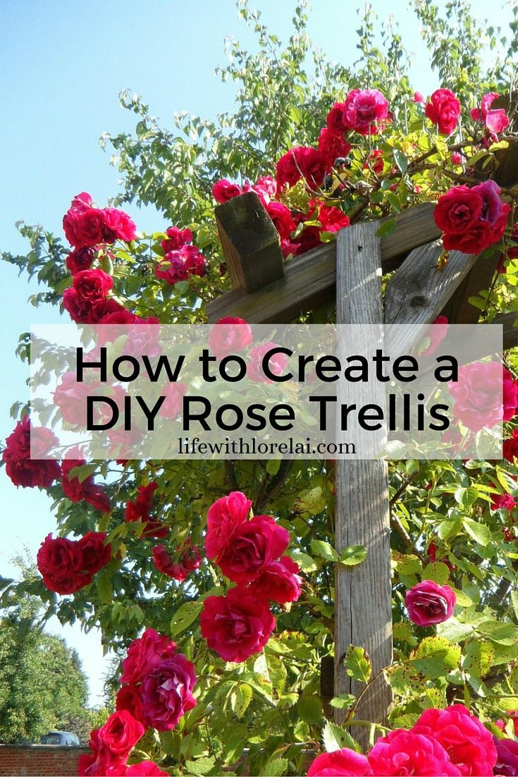 How To Create A Diy Rose Trellis Rose Trellis Diy 400 x 300