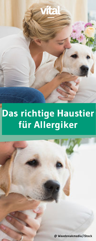 Das Richtige Haustier Fur Allergiker Haustiere Tiere Hunde