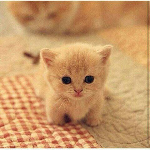 Pin by ALiZ_X on PeTs Kittens cutest, Cute animals, Cute