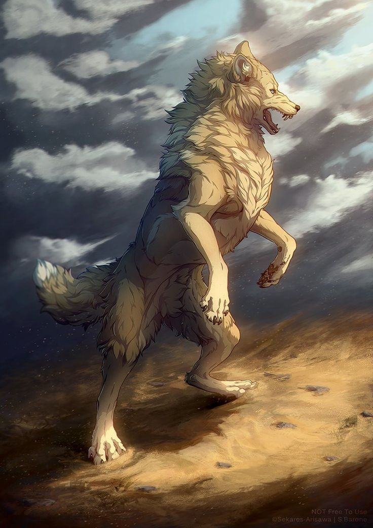 Photo of Wolf Drawing – 75 Picture Ideas