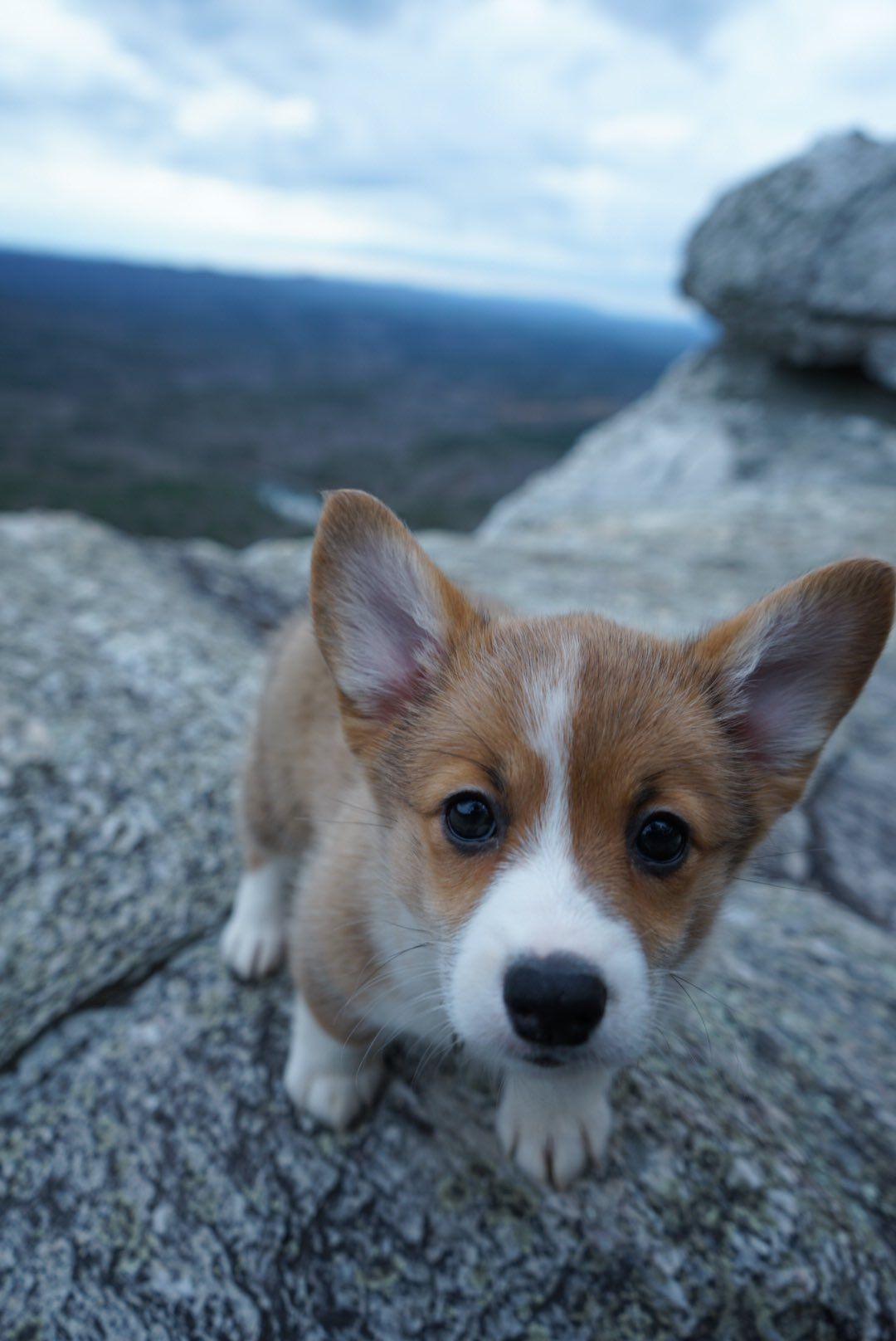 Matt Mcguire On Pup Puppies Animals