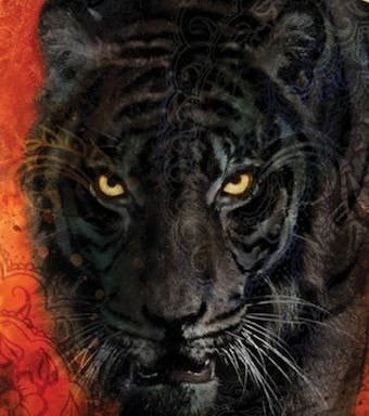 Face To Face With A Black Furred Tiger With Pirate Gold Eyes