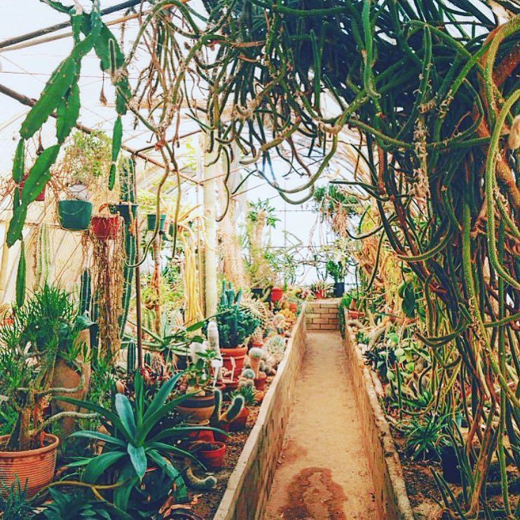 Everyone should go visit a greenhouse this weekend! Who's in?? #JungalowStyle by thejungalow