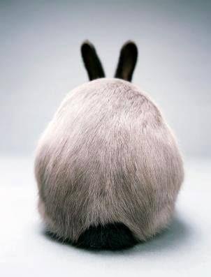 Beautiful colouring - bunny