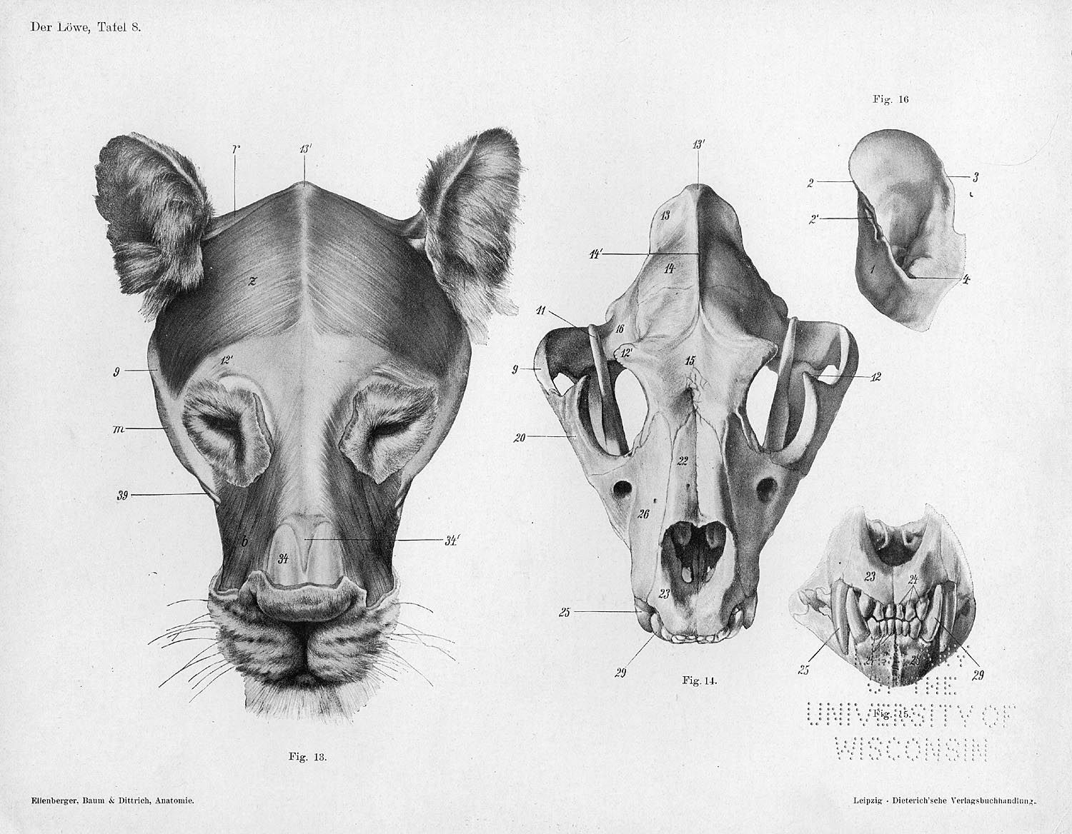 These are cranial views of the musculoskeletal system of the head ...