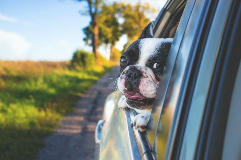 Pet Preference 4 Tips For Moving Cross Country With Dogs Moving With Dogs Moving With Dogs Tips Moving With Dog Dog Friends Dog Travel Training Your Dog