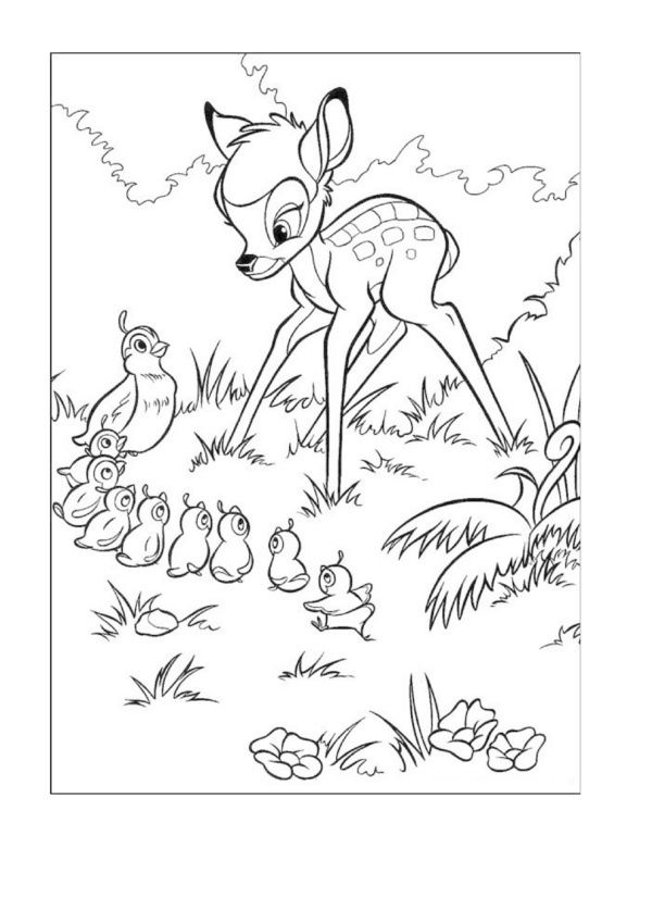 Tegninger til Farvelægning Disney 290 ❤Beautiful coloring - new free coloring pages quail