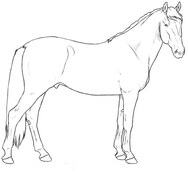 Andalusian Horses Coloring Pages Coloring Pages For Kids Horse